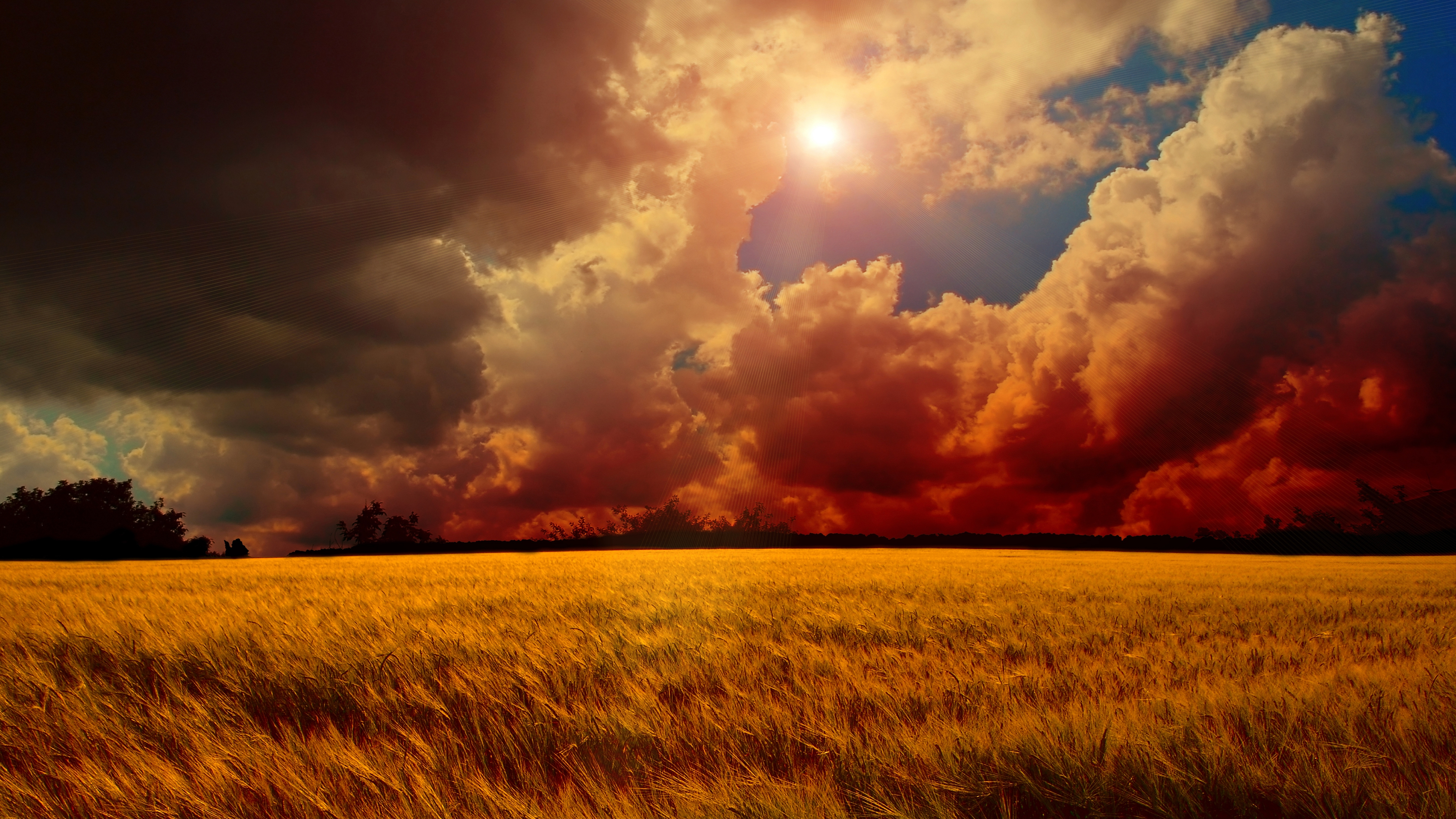 Yellow Wheat Field Nature 8k Ultra Hd Wallpaper Observatory For